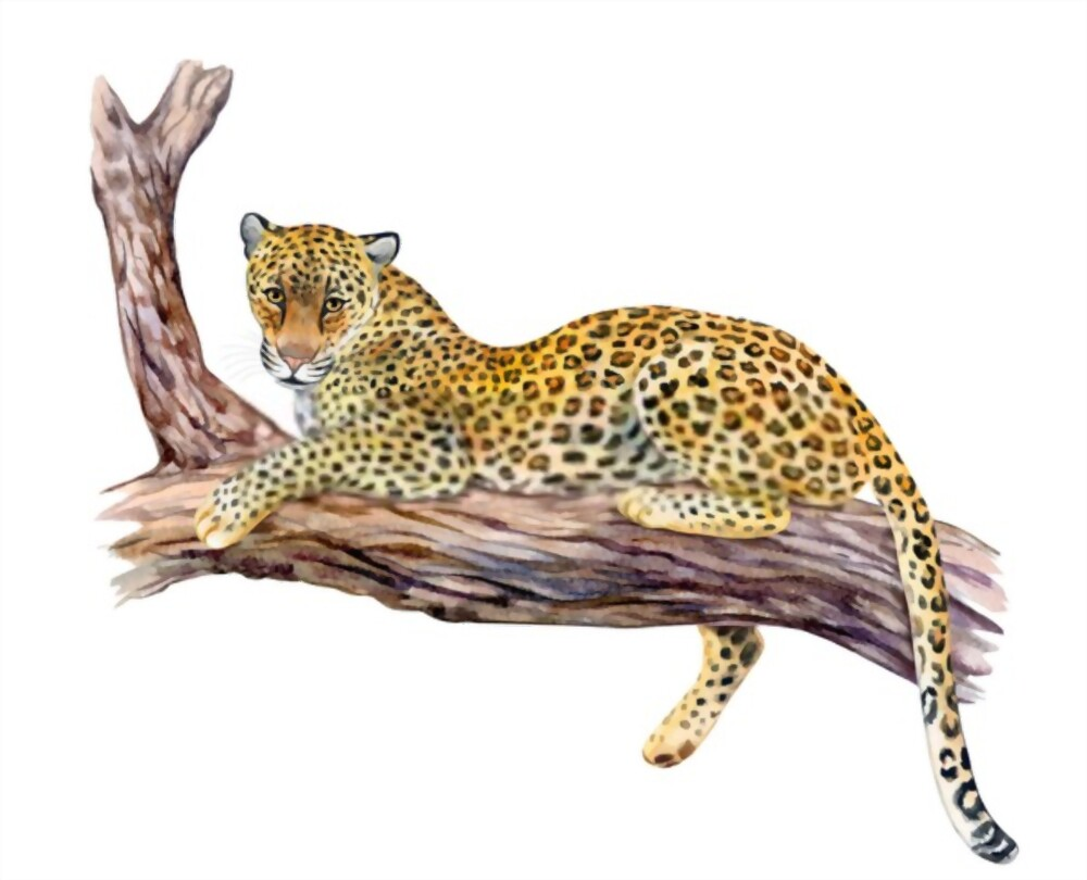 A New Wild Cats Story It's So Amazing For Kids | Kids Stories